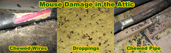 How To Get Rid Of Mice In The House Attic Kitchen